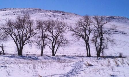 Winter trees in Denver