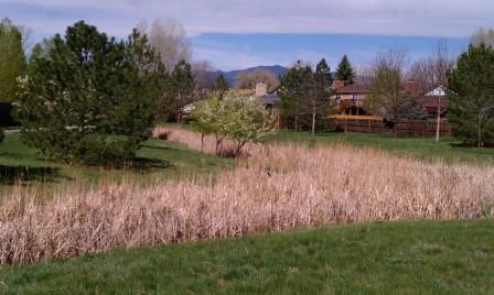 creek scene spring