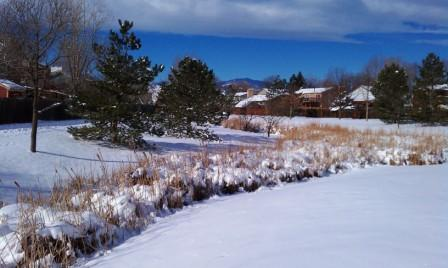 winter scene at the creek