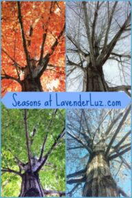 four seasons of a tree
