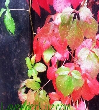 greens and reds of autumn