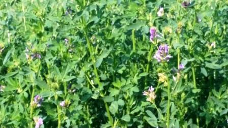 Tasty Tidbits: Farmers on Farming