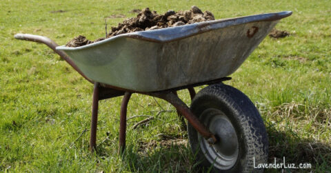 downsides of open adoption, wheelbarrow of manure